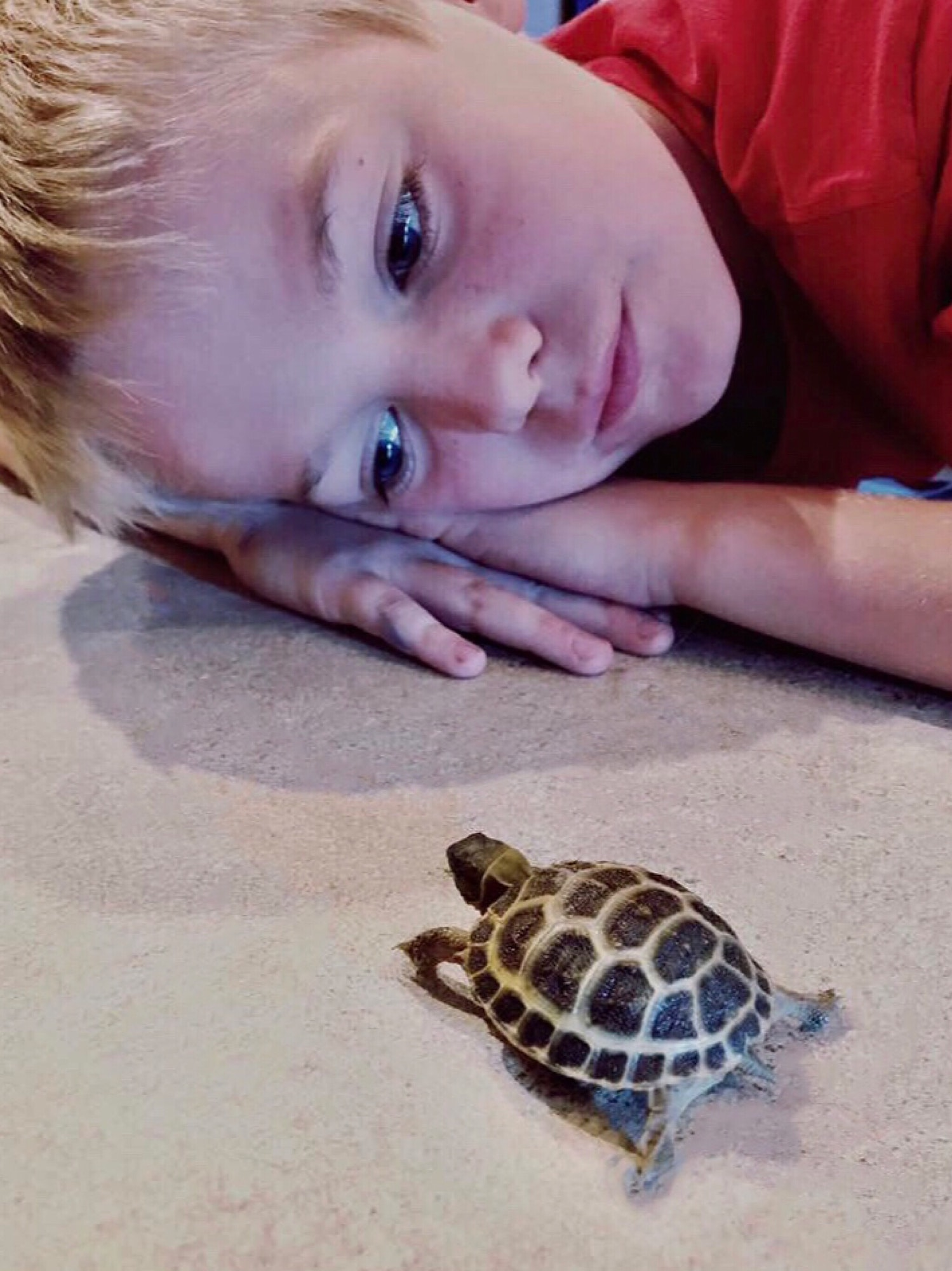 Young boy watching his pet baby turtle walk towards him!